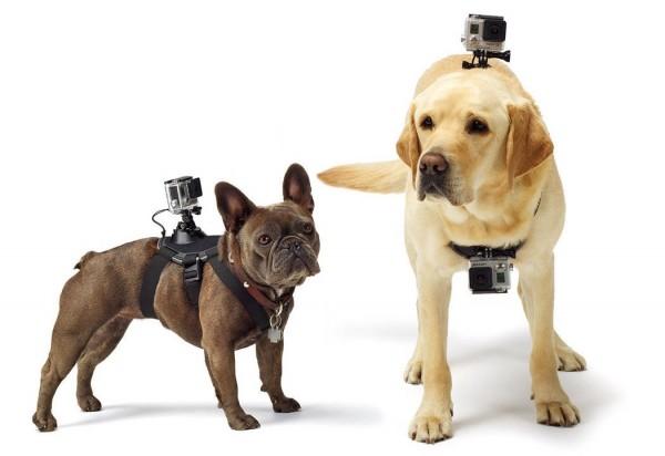 GoPro dla psa