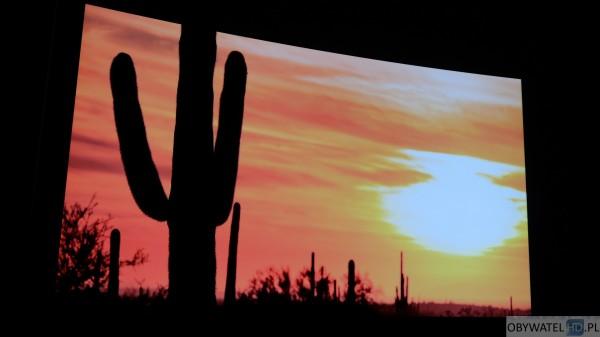 LG EG960V OLED 4K - zdjęcia - kaktus