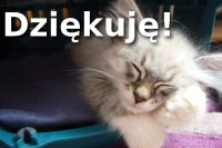 Dziękuję za 1000 subskrypcji na YouTube, a w podzięce mam dla Was koty!