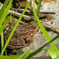 Majówka 2016 - żaba